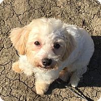 Adopt A Pet :: PALOMA - Emeryville, CA
