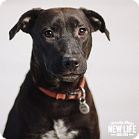 Adopt A Pet :: Lizzie - Portland, OR