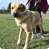 Adopt A Pet :: Merry - St. Francisville, LA