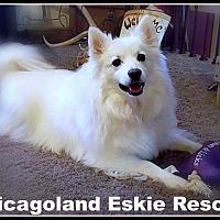 Adopt A Pet :: Bert - Elmhurst, IL