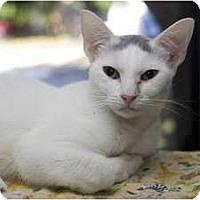 Adopt A Pet :: Sherry - New Port Richey, FL