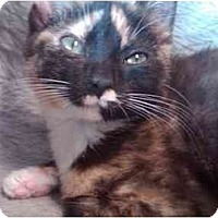 Adopt A Pet :: Sophie - Erie, PA