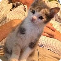 Adopt A Pet :: Hannah - Westfield, MA