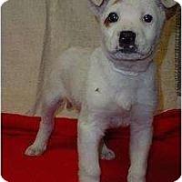 Adopt A Pet :: Mason - Westbrook, CT