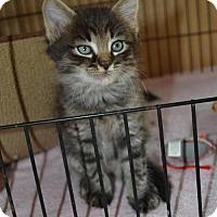 Adopt A Pet :: Kumquat - Hollywood, MD