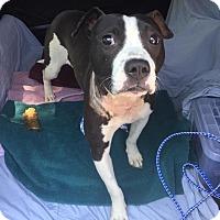 Adopt A Pet :: Matilda - Villa Park, IL