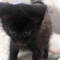 Adopt A Pet :: Spooky - Hamilton, ON