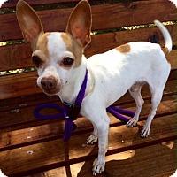 Adopt A Pet :: Baxter - Surrey, BC