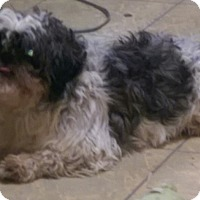 Adopt A Pet :: Sparky - ADOPTED!! - Antioch, IL