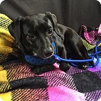 Adopt A Pet :: Richie - Ft. Lauderdale, FL