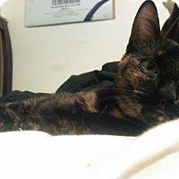 Adopt A Pet :: Haumea - Philadelphia, PA