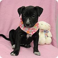 Adopt A Pet :: Jemma - Brattleboro, VT