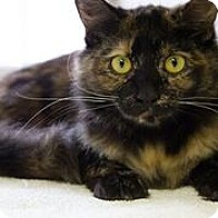 Adopt A Pet :: SALLY - DeLand, FL