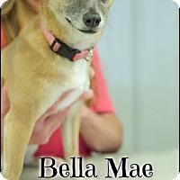 Adopt A Pet :: BELLA MAE (POM-DC) - Spring Valley, NY