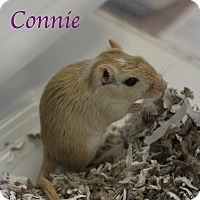 Adopt A Pet :: Connie - Bradenton, FL