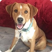 Retriever (Unknown Type) Mix Dog for adoption in Halethorpe, Maryland - Roscoe - ADOPTION PENDING - CONGRATS REISSE FAMILY