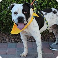 Adopt A Pet :: ORLANDO - Las Vegas, NV