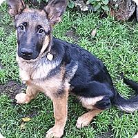 Adopt A Pet :: Liberty - Oakland, CA