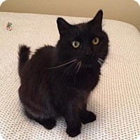 Adopt A Pet :: Hemingway Lucky McLuckerson (CK) - Tampa, FL