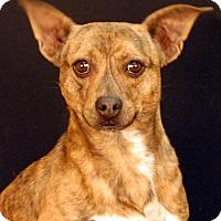 Adopt A Pet :: Pickles - Newland, NC