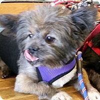 Adopt A Pet :: Floyd - Cincinnati, OH