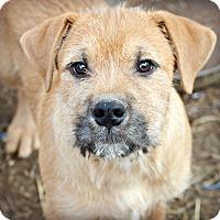 Adopt A Pet :: Shagrag~adopted! - Glastonbury, CT