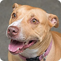 Adopt A Pet :: Trudi - Westfield, NY