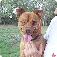 Adopt A Pet :: Spur - Ranger, TX