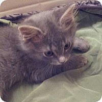 Adopt A Pet :: Baby Joey - Columbus, OH