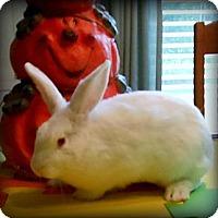 Adopt A Pet :: Casey - Williston, FL