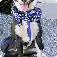 Adopt A Pet :: Reggie not hyper - Sacramento, CA
