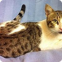 Adopt A Pet :: Forrest - Dallas, TX