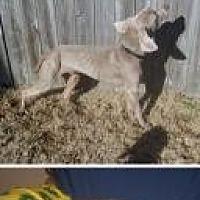 Adopt A Pet :: Sheldon - Birmingham, AL