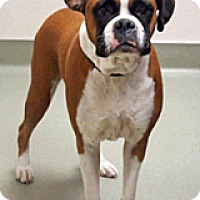 Adopt A Pet :: Rosie - Wildomar, CA