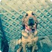 Adopt A Pet :: Loretta - Fayetteville, AR