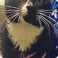 Adopt A Pet :: Doodle - Merrifield, VA