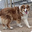 Adopt A Pet :: Daniel