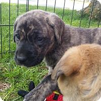 Adopt A Pet :: Margaret Murphy - Mechanicsburg, PA