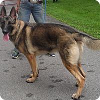 Adopt A Pet :: Anya - Rigaud, QC