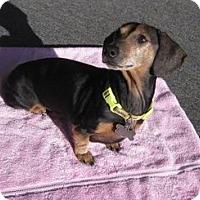 Adopt A Pet :: MISSY - Portland, OR