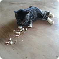 Adopt A Pet :: Scampy - Huntsville, AL