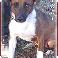Adopt A Pet :: Nikki -Adoption Pending - Marlborough, MA