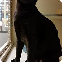 Adopt A Pet :: Khloe - Cary, NC