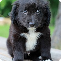 Adopt A Pet :: Aaron - Waldorf, MD