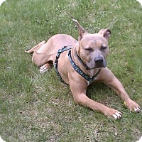 Adopt A Pet :: Paige - Framingham, MA