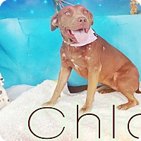 Adopt A Pet :: Chloe - Odessa, TX