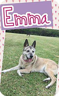 Shiba Inu Mix Dog for adoption in Lake Placid, Florida - Emma