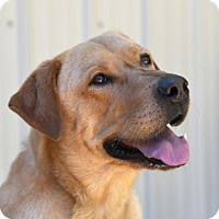 Adopt A Pet :: Oliver - Chattanooga, TN