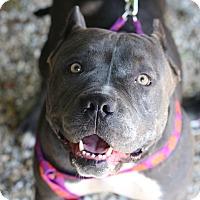 Adopt A Pet :: Peanut - Middlebury, CT