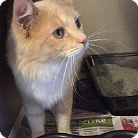 Adopt A Pet :: Emmie - Anderson, SC